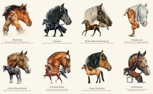 Horse Breeds Mustang Friesian Thoroughbred 24x44 Cotton Fabric Panel