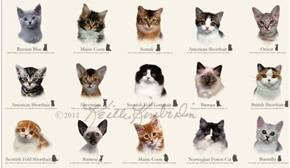 Cat Breeds Siamese Coon Ocicat Russian Blue 24x44 Cotton Fabric Panel