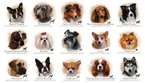 Picture of Dog Breeds Schnauzer Corgi Chihuahua Husky 24x44 Cotton Fabric Panel
