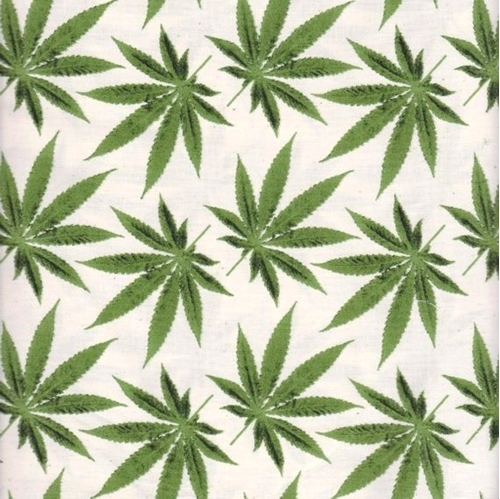 Home Grown Cannabis Marijuana Hemp Leaves on White Cotton Fabric