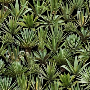 Succulents Sedum Yucca Aloe Succulent Plants Desert Trip Cotton Fabric