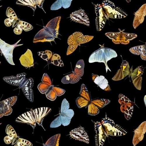 Picture of Butterflies and Moths Butterfly Moth Varieties on Black Cotton Fabric