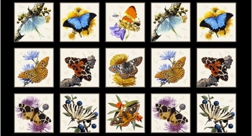 Picture of Butterflies and Moths Butterfly 24x44 Black Cotton Fabric Panel