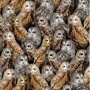 Nocturnal Wonders Packed Barred Owls Owl Collage Black Cotton Fabric