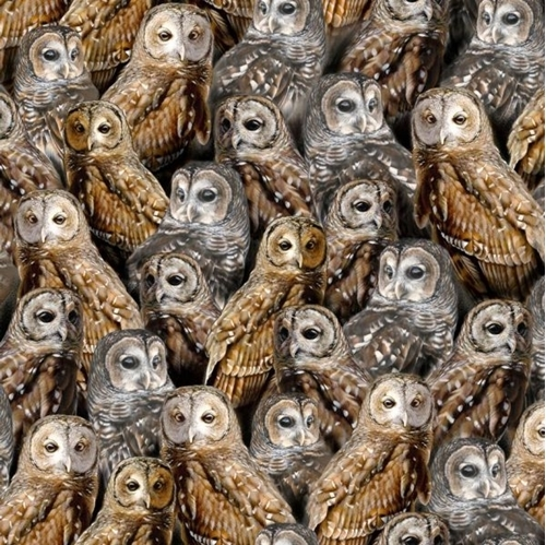 Picture of Nocturnal Wonders Packed Barred Owls Owl Collage Black Cotton Fabric
