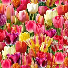 Bright Tulips Packed Tulip Farm Fields of Color Cotton Fabric