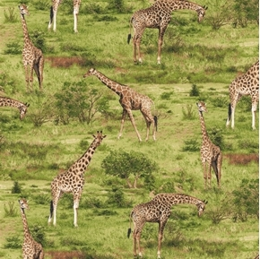 Born Free Giraffe Wild Giraffes on the African Plains Cotton Fabric