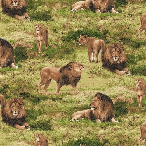 Born Free Lion Male Female Lions on the African Plains Cotton Fabric