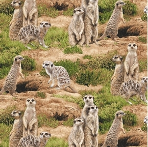 Picture of Born Free Meerkat Meerkats Wild in the Desert Cotton Fabric