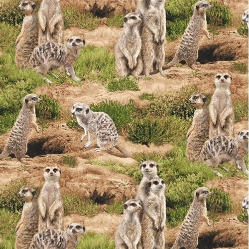 Born Free Meerkat Meerkats Wild in the Desert Cotton Fabric