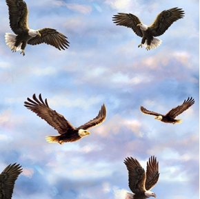 Picture of Flying Bald Eagle Eagles on a Cloudy Sky Cotton Fabric