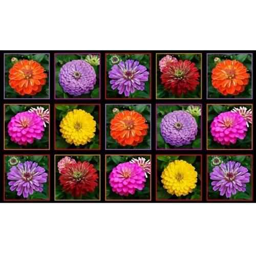 Zinnias Beautiful Zinnia Flower Blocks 24x44 Large Cotton Fabric Panel