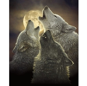 Past and Present Wolf Trinity Wolves Howling Cotton Fabric Panel