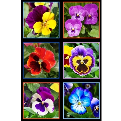 Lovely Pansies Flowers in Squares 24x44 Large Fabric Panel