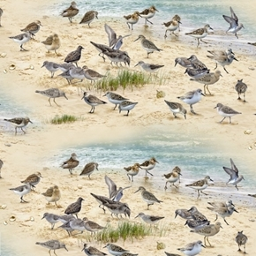 Coastal Dreams Sand Pipers Beach Birds Dune Bird Cotton Fabric