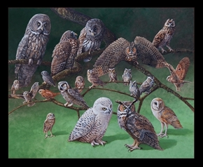 Picture of Owls of North America Owl Species 24x22 Cotton Fabric Pillow Panel