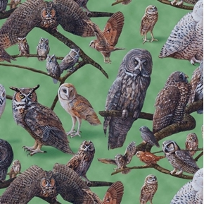 Picture of Owls of North America Owl Species on Branches Green Cotton Fabric