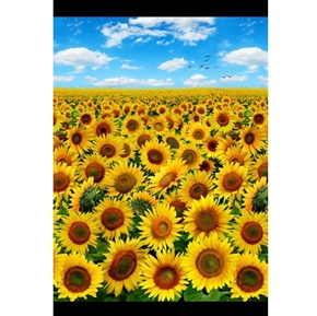 Sunflowers Sunflower Field Under Blue Sky 24x44 Cotton Fabric Panel