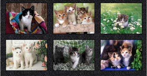 Somebody to Love Kittens Digitally Printed Kitten 24x44 Fabric Panel