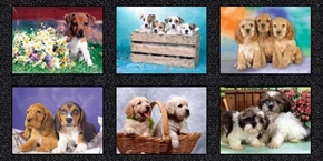 Somebody to Love Puppies Digitally Printed Puppy 24x44 Fabric Panel