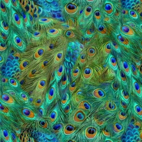 Picture of Exotica Peacock Feathers Iridescent Blue Green Feather Cotton Fabric