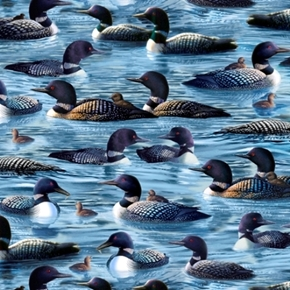 Loons Loon Family Chicks Water Birds Hautman Dark Blue Cotton Fabric