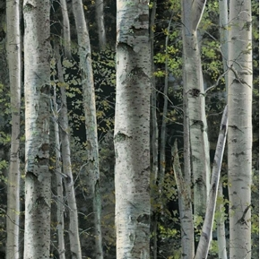 Wild Wings Reluctant Companion Packed Birch Trees Cotton Fabric