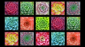 Succulent Charm Succulents Sedum Block 24x44 Cotton Fabric Panel
