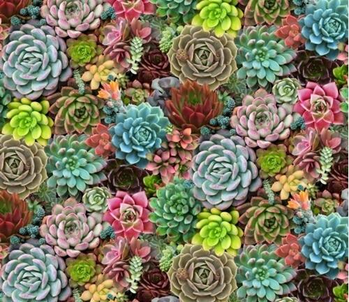 Succulent Charm Succulents Sedum Desert Plants Cotton Fabric