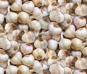 Picture of Food Festival Garlic Heads White Cotton Fabric