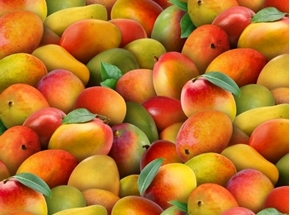 Picture of Food Festival Mangoes Delicious Mango Cotton Fabric