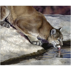 Picture of Wild and Playful Cougar Drinking Digital Animal Cotton Fabric Panel