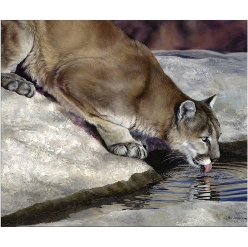 Wild and Playful Cougar Drinking Digital Animal Cotton Fabric Panel