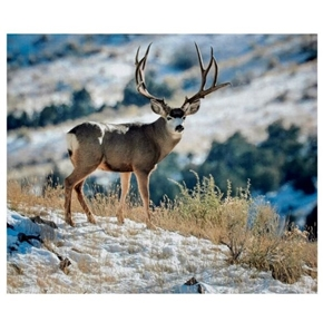 Kings Camo Deer Buck Mountain Wild Animal Digital Printed Pillow Panel