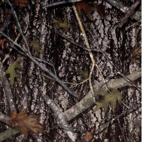 True Timber Outdoors Camo New Conceal Camouflage Bark Cotton Fabric