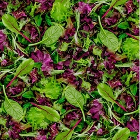 A La Carte Lettuce Spring Mix Spinach Radicchio Greens Cotton Fabric