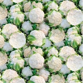A La Carte Cauliflower Heads and Leaves Cotton Fabric