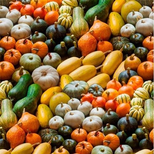 A La Carte Gourds and Pumpkins Autumn Squash Cotton Fabric