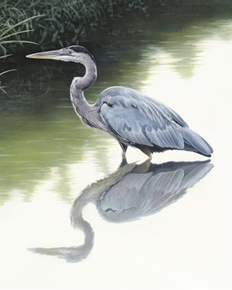 Picture of Beauty of Blue Heron Bird in Creek Large Digital Cotton Fabric Panel