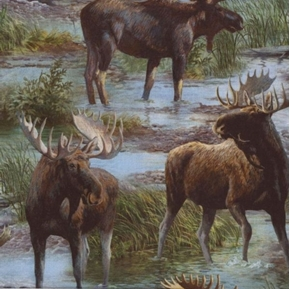 Picture of Wild Wings Cool Water Wild Moose in the Stream Cotton Fabric