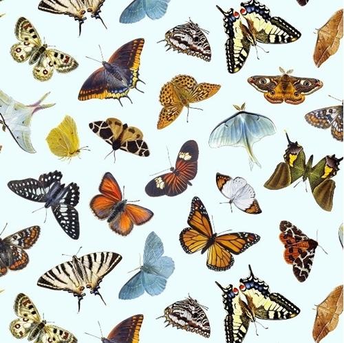 Butterflies and Moths Butterfly Moth Varieties Sky Blue Cotton Fabric