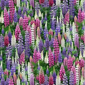Landscape Medley Lupine Flowers Purple Pink White Flower Cotton Fabric