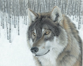 Wolf in Aspens Snowy Forest Large Digital Cotton Fabric Panel