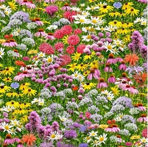 Bees and Flowers Wildflower Garden Daisy Bee Balm Clover Cotton Fabric