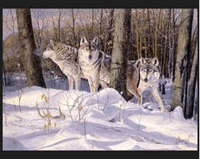 Silent Trackers Wild Wolves in the Woods Jack Paluh Cotton Fabric Panel