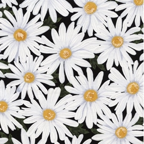 Packed Daisies White Daisy Flowers on Black Cotton Fabric
