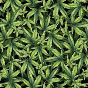 Marijuana Plant Packed Cannabis Leaves Green on Black Cotton Fabric