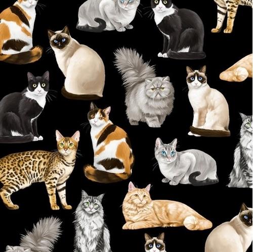 Fancy Felines Exotic Cat Breeds Cats Kittens on Black Cotton Fabric