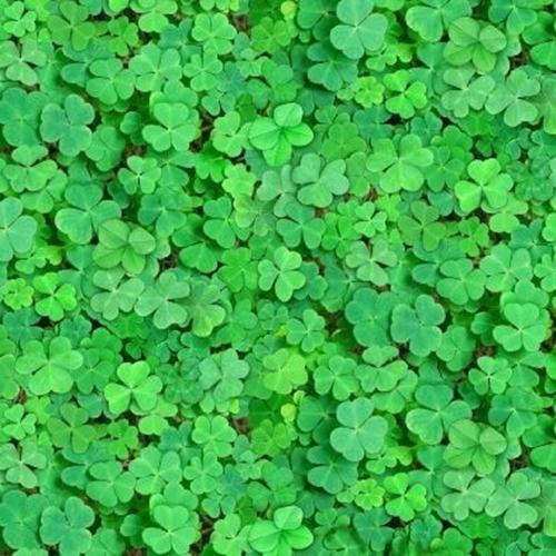 Landscape Medley Clovers Green Clover Patch Cotton Fabric