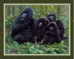 We Are Family Kwitonda Mountain Gorilla John Banovich Fabric Panel